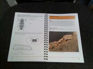 BRE Book - all about insects that bore into wood, plus rots and molds